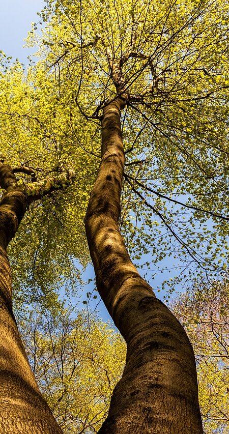 tree-3330442_1280